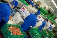 Produkcja praca przy pakowaniu w Anglii od stycznia 2013