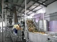 Praca w Anglii na linii produkcyjnej – pakowanie owoców od zaraz