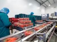 Oferty pracy w Anglii przy produkcji owocowej w przetwórni (Kent)