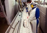 Praca w Norwegii na produkcji rybnej w przetwórni – Fredrikstad
