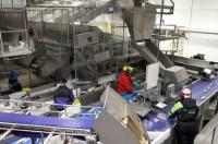 Oferty pracy w Norwegii – produkcja rybna w przetwórni bez języka (Fredrikstad)