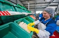 Praca w Holandii – pakowanie, sortowanie warzyw i owoców od zaraz 2013