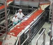 Praca w Niemczech – produkcja przecieru bez znajomośći języka Kolonia
