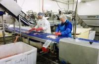 Oferta sezonowej pracy w Norwegii w przetwórni rybnej na produkcji 2014