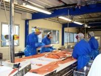 Norwegia praca na produkcji przy filetowaniu ryb bez znajomości języka Melbu