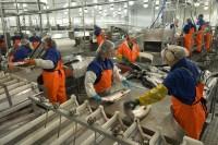 Norwegia praca dla Polaków na produkcji mięsnej 2014 w Oslo od zaraz