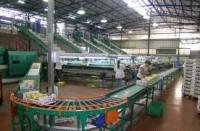 Oferta pracy w Anglii przy pakowaniu owoców na linii produkcyjnej Evesham