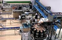 Dam pracę w Holandii na produkcji spożywczej bez doświadczenia Venlo